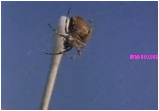 ragno e droga