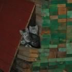 foto gattino 02