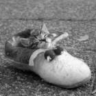 foto gattino 03