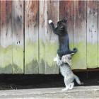 foto gattino 09