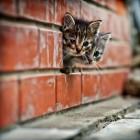 foto gattino 10