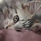 foto gattino 11