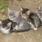 foto gattino 14