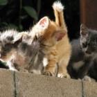 foto gattino 18