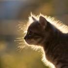 foto gattino 23
