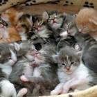 foto gattino 24