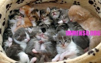 foto gattino 24 350x218