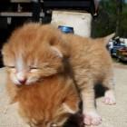 foto gattino 25