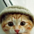 foto gattino 29