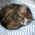 foto gattino 30