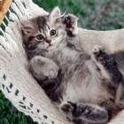 foto gattino 31