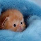 foto gattino 32
