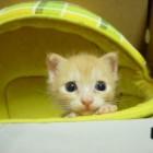 foto gattino 33