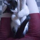 foto gattino 34