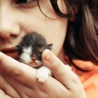 foto gattino 35