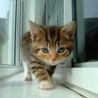 foto gattino 36