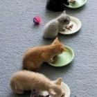 foto gattino 37