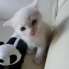 foto gattino 39