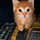 foto gattino 40