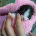 foto gattino 44