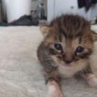 foto gattino 45