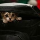 foto gattino 46