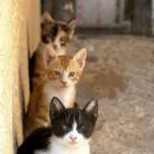foto gattino 48
