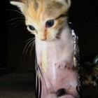 foto gattino 49