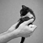foto gattino 51