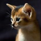 foto gattino 52