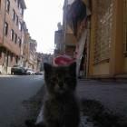 foto gattino 53