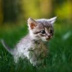 foto gattino 55