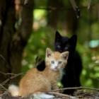 foto gattino 57