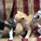 foto gattino 59