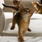 foto gattino 61