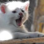foto gattino 62
