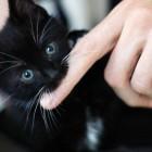 foto gattino 63