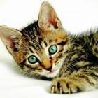 foto gattino 64