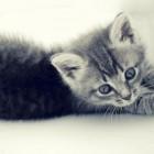 foto gattino 66