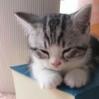 foto gattino 67