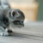 foto gattino 68