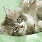 foto gattino 70