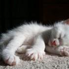 foto gattino 72