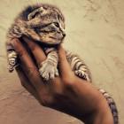 foto gattino 73