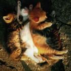 foto gattino 76