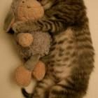 foto gattino 77