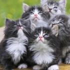foto gattino 79