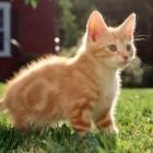 foto gattino 80