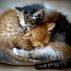 foto gattino 84