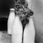 foto gattino 86